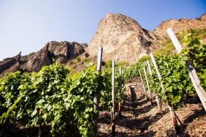 Die Nahe bietet fantastische Lagen für hervorragende Weine.